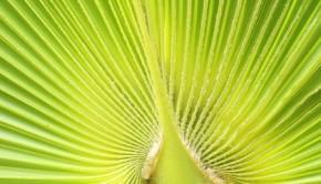 palmsundayfeatured