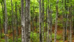 woodsF