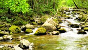 camp.creek1