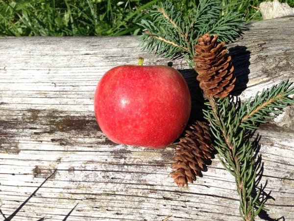 apple pinecome