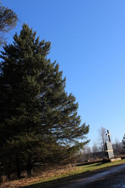 tree opening